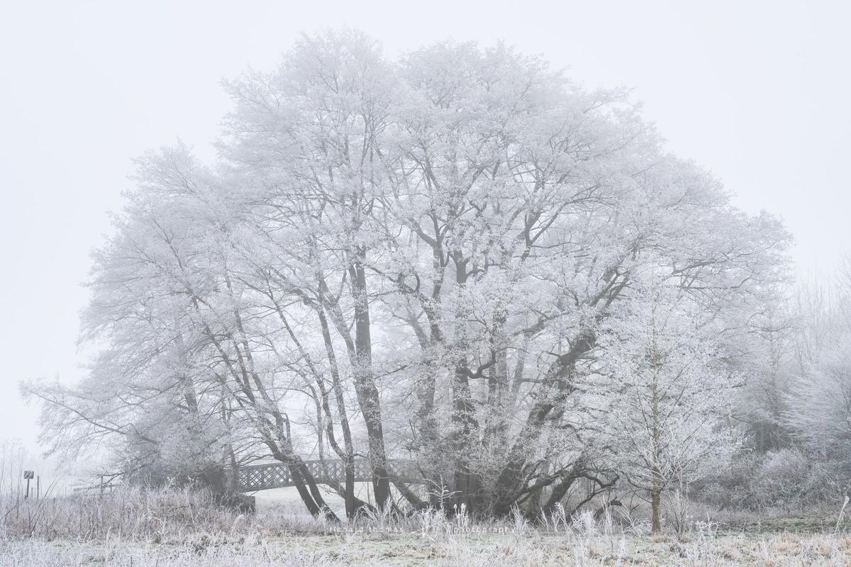 White Bridge - WINTER