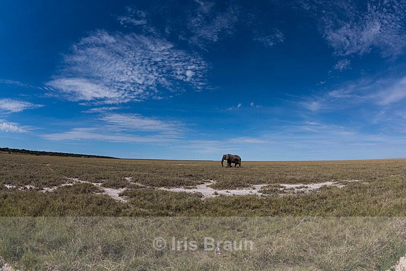 Big sky - Elephant