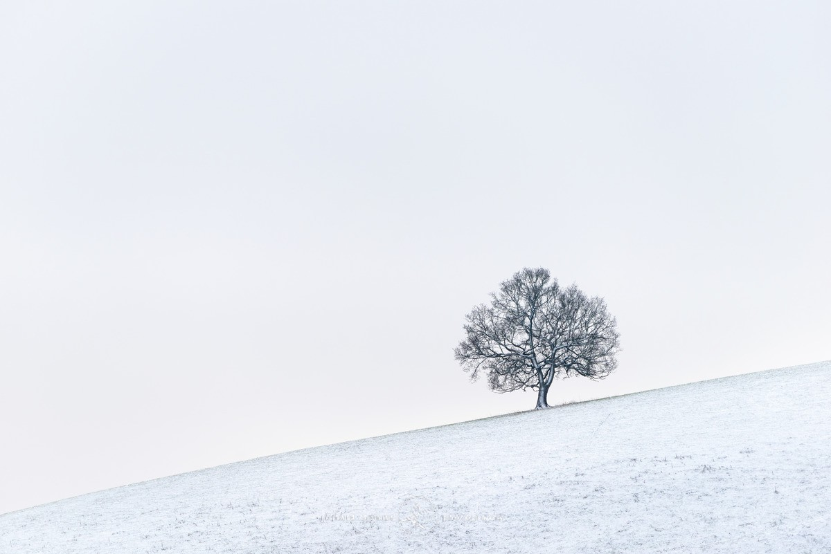 Tree on a slippery slope. - WINTER