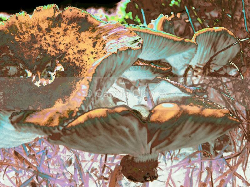 Fungi NF009 - Natural Form