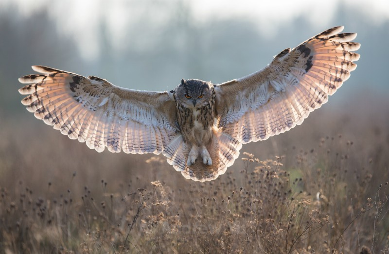 Spreading its Wings - Wildlife and Nature Photography