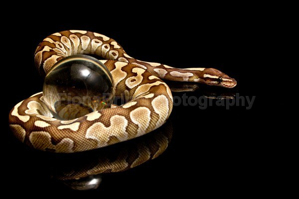 snakes-17 - Reptile Photography