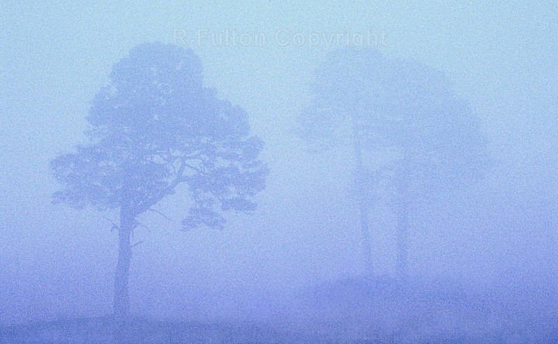 Trees in the Mist - Creative