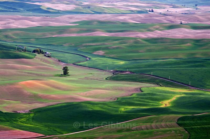 fields 11 - Palouse