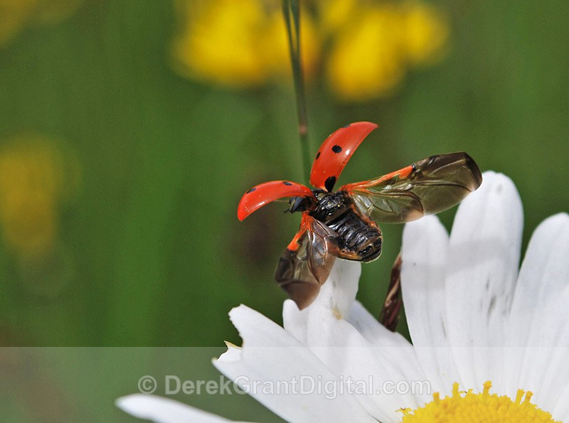 Ladybug Liftoff! - Bees, Beetles, Bugs