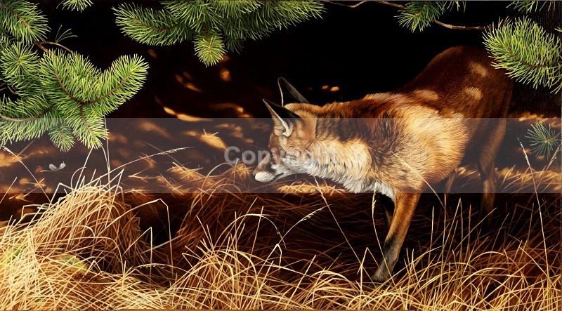 Silent pursuit - Foxes
