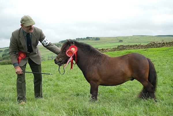 10 - Moniaive Horse Show 2010