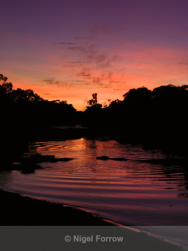Silhouette of a Hippo creating waves in a river at sunset - Hippopotamus
