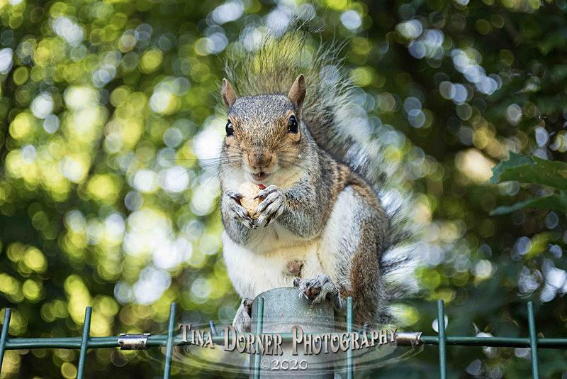 Jazzy Squirrel