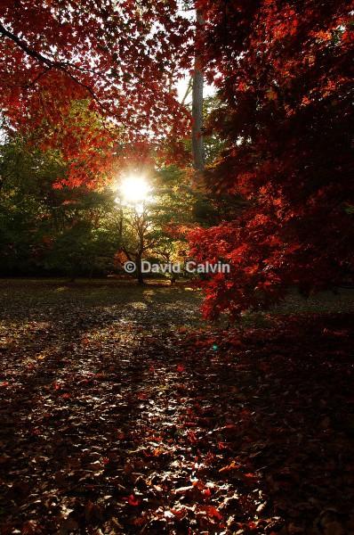 Autumn at Westonbirt - Rural