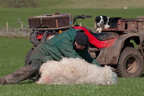 2 - The Lambing