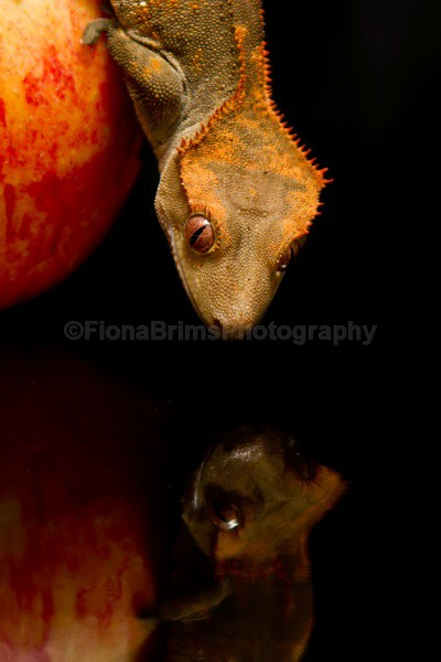 blobs dinner - Reptile Photography