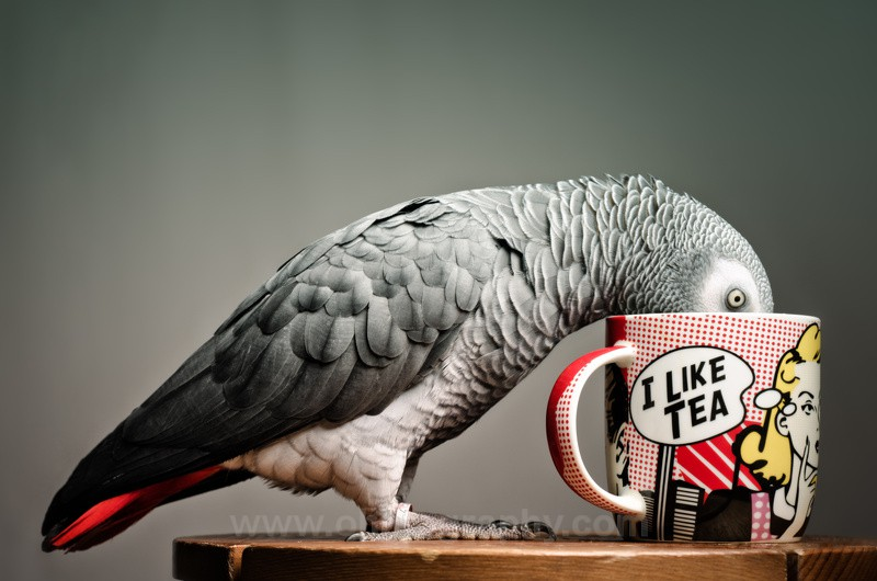 I love tea. - Animals