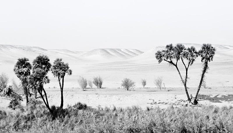 Desert Morn - Monochrome