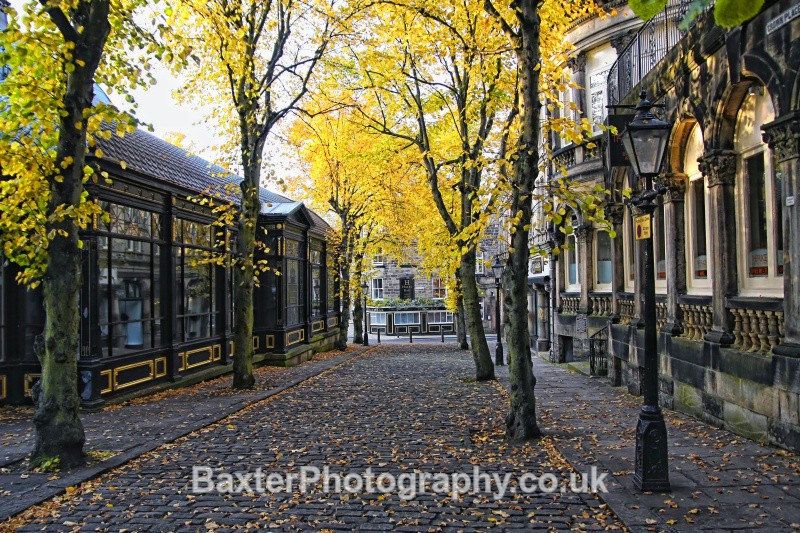 Autumn Boulevard - Harrogate Town
