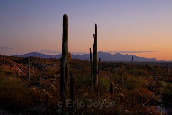 Autumn Dusk - Tuscon, Arizona