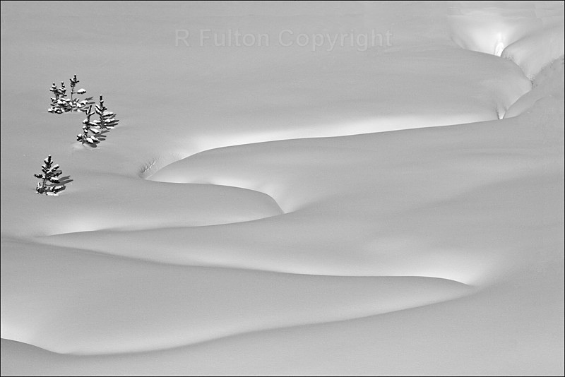 Snow Pattern - Yellowstone