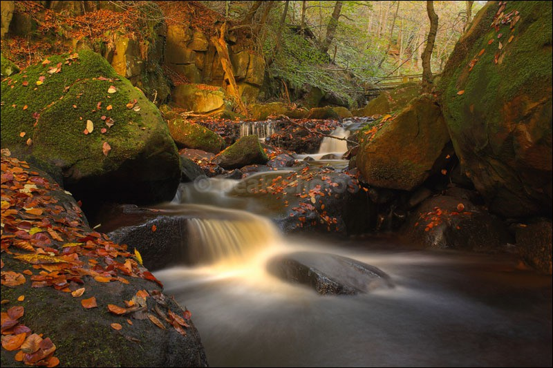 Padley Gorge - Photographs of Woodland & Rivers