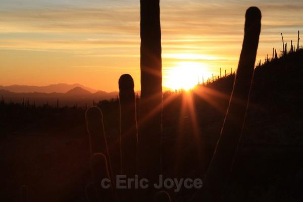 Autumn Flare - Tuscon, Arizona
