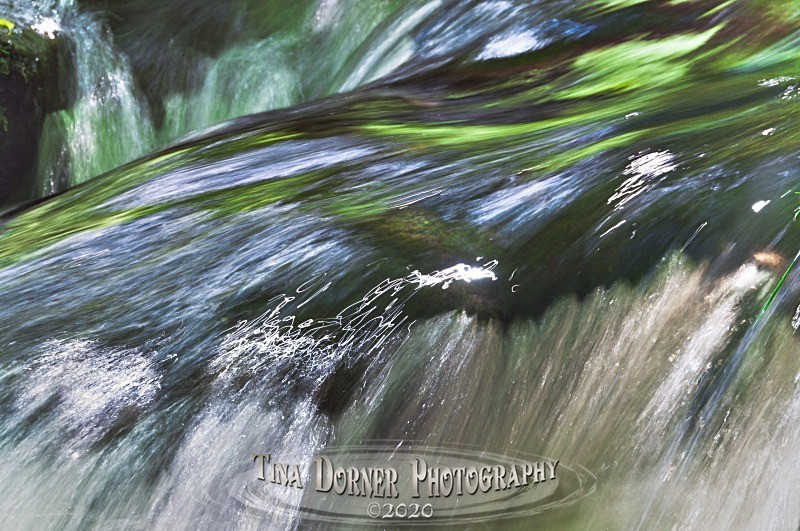 by Tina Dorner Photography, Forest of Dean and Wye Valley, Gloucestershire