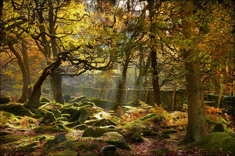 Padley Trees - Photographs of Woodland & Rivers
