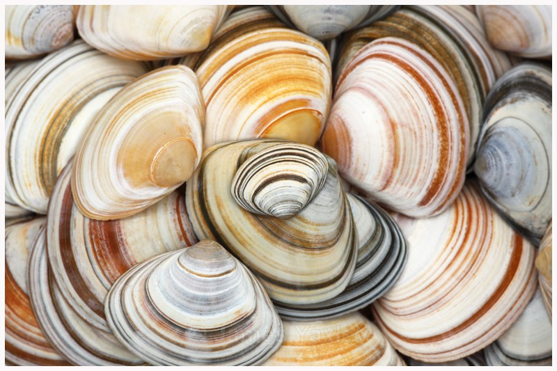 Stripey Trough Shells - Photography by Kate Yaxley