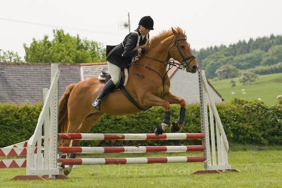 24 - Equestrian Photography