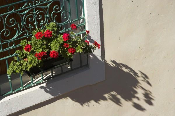 window box - Provence