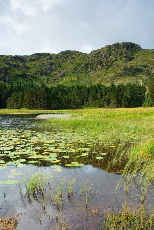 Photo of Harrop Tarn and Tarn Crags above Thirlmere in Lakelane, Lake District Photography