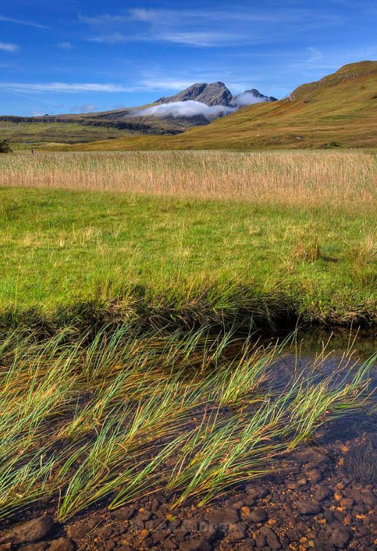reeds2_edited-1 - Highlands and Islands