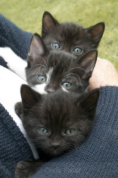 Frear-Kittens - For T&C