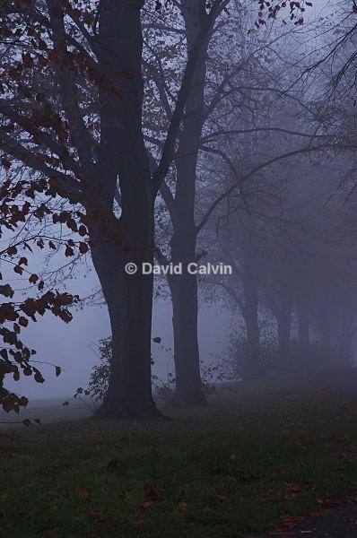 Autumn Mist - Urban