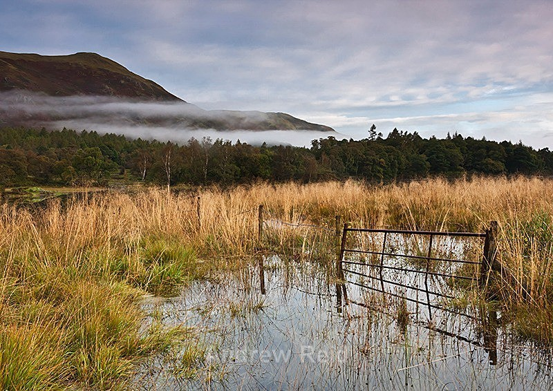 Water Logged - Landscapes