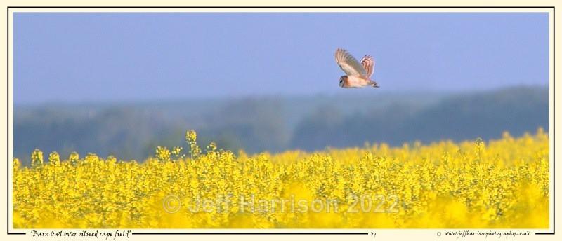 BO 010 - Barn Owls