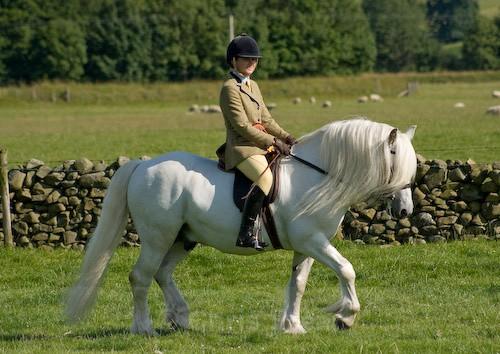 164 - Moniaive Horse Show 2008