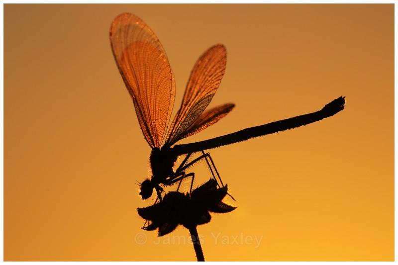 Warming Up - Butterflies, Dragonflies and Demoiselles
