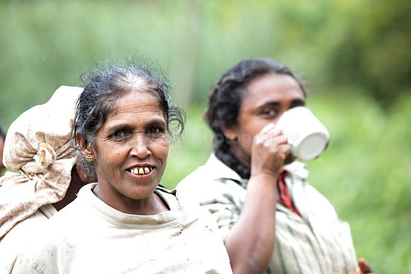 Tea plantation workers, Ella Sri Lanka - Sri Lanka wildlife, people & places