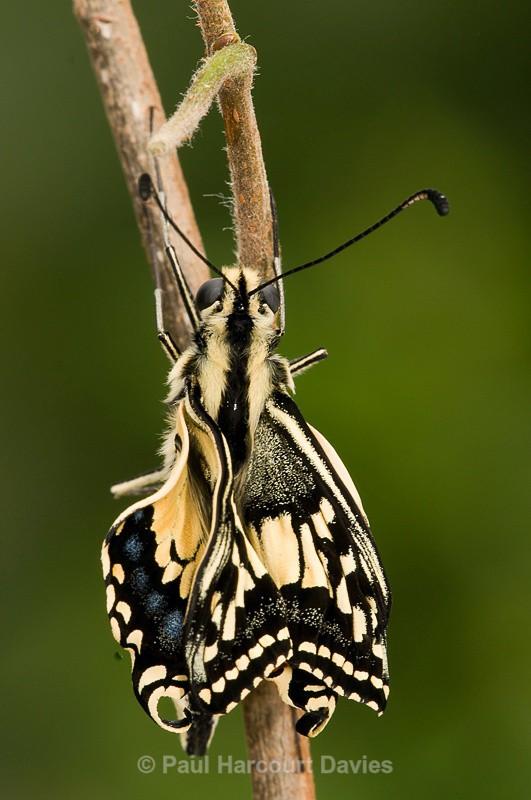 - Bugs: Butterflies