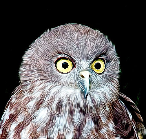 Barking Owl surprised - CrazyCat Imagery
