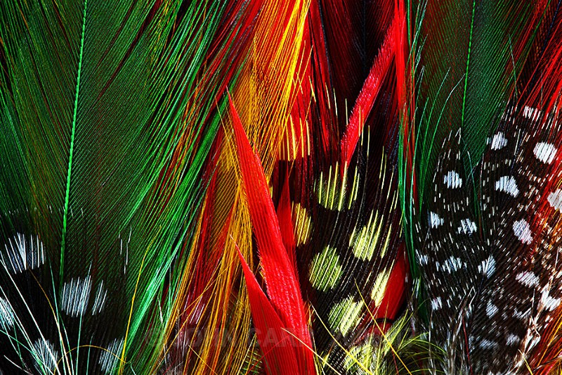 Feathers-4-3954 - ABSTRACT DETAIL/CLOSE UP PHOTOS