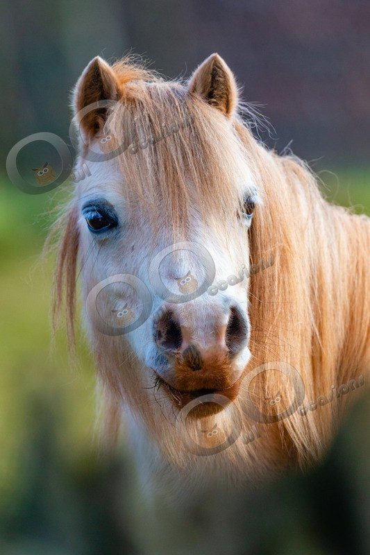Pony-4203 - Pet Photography