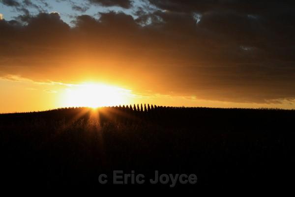 Cornfield Sunset - SW Minnesota
