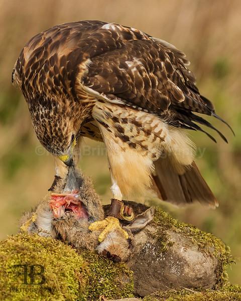 wow apr pd-44 - Birds of Prey