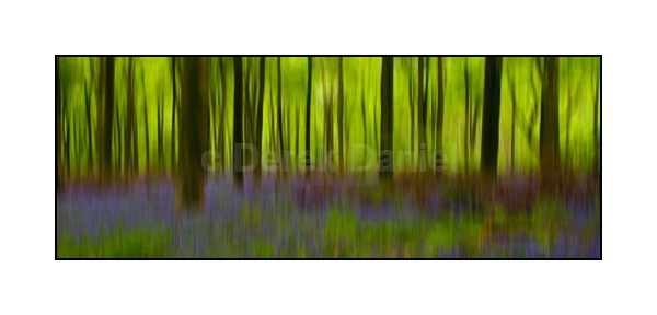 Bluebell Wood Impression