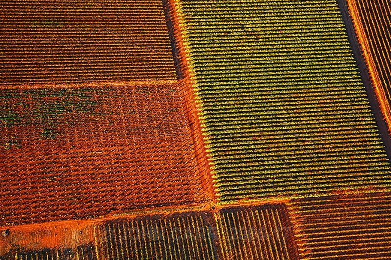 Autumn Vines-3864 from a Hot-Air Balloon. - AERIAL PHOTOS