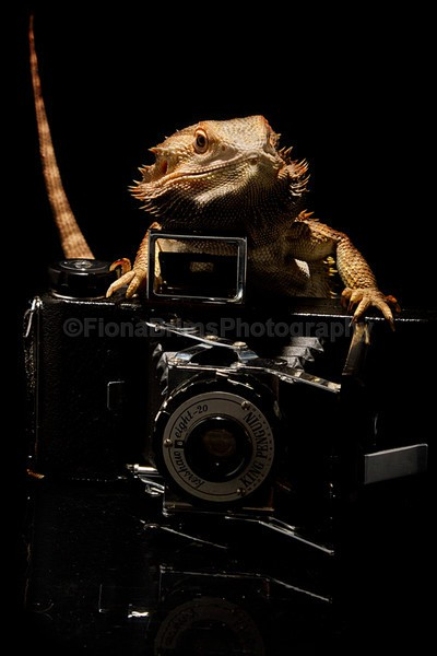 animals-16 - Reptile Photography