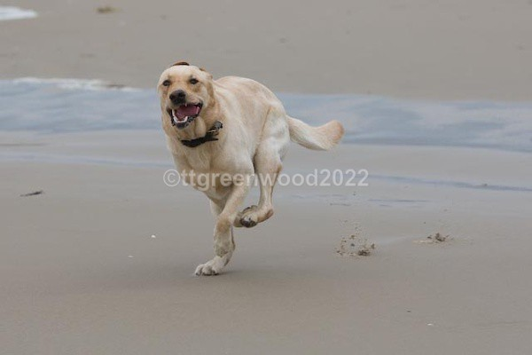 - Canine Action