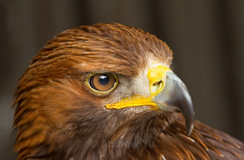 Eagle Eyed - Wildlife and Nature Photography