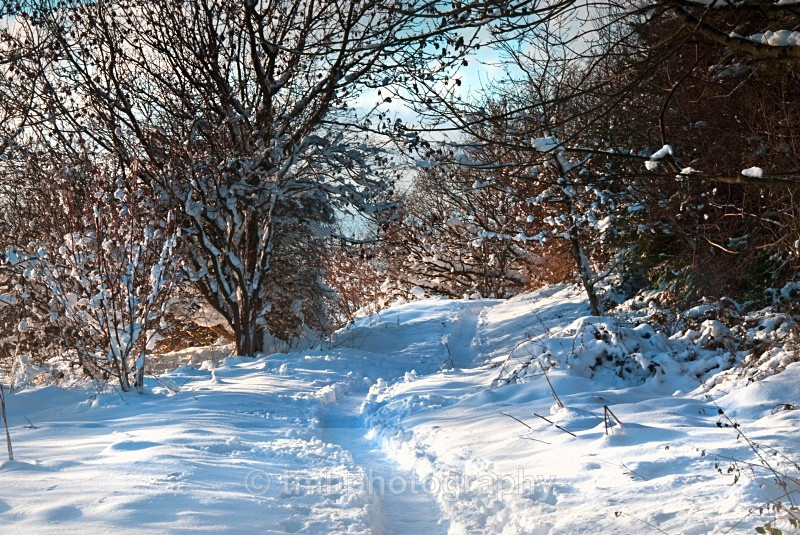 Winter's Path. - Snow Scene's /Winter