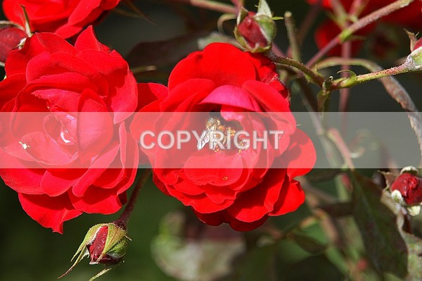 CDSC-07-2 - The Flower Shop